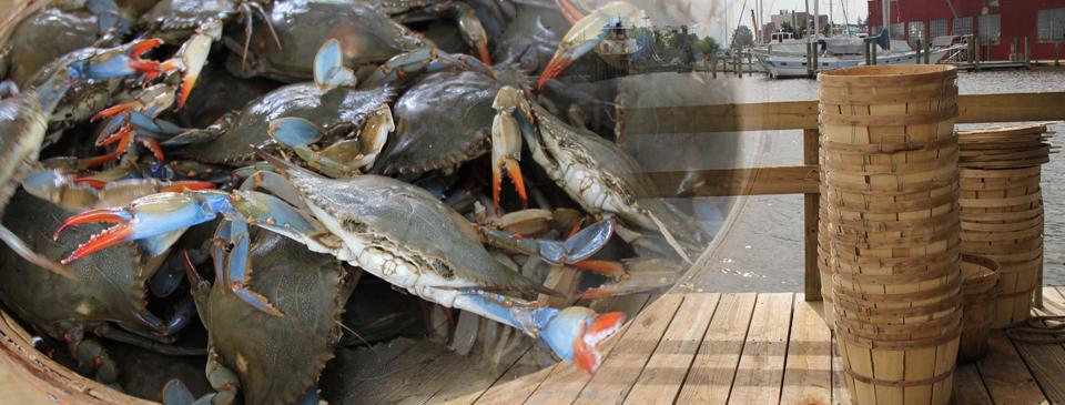 Crabs On Dock